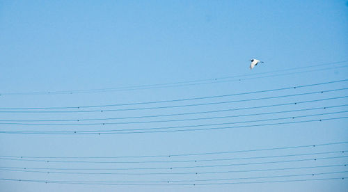 Stork and Power Lines I